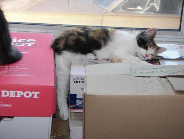 Crazy-Cat-Sleeping-Positions (21)