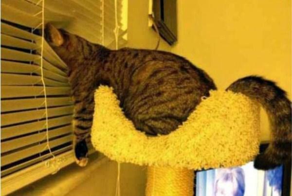 Crazy-Cat-Sleeping-Positions (23)