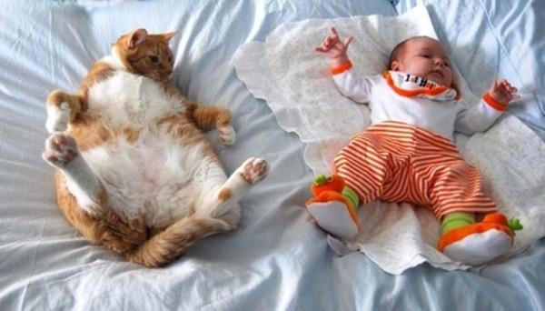 Crazy-Cat-Sleeping-Positions (26)