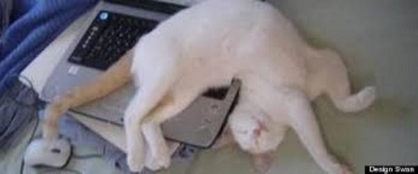Crazy-Cat-Sleeping-Positions (27)