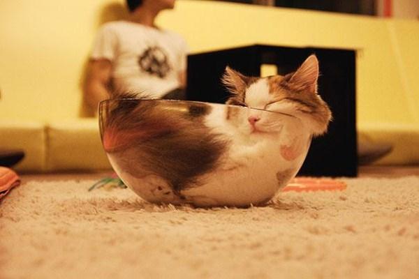 Crazy-Cat-Sleeping-Positions (3)