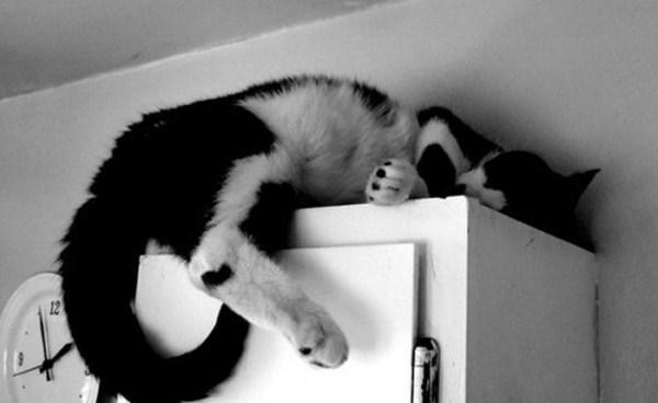 Crazy-Cat-Sleeping-Positions (35)
