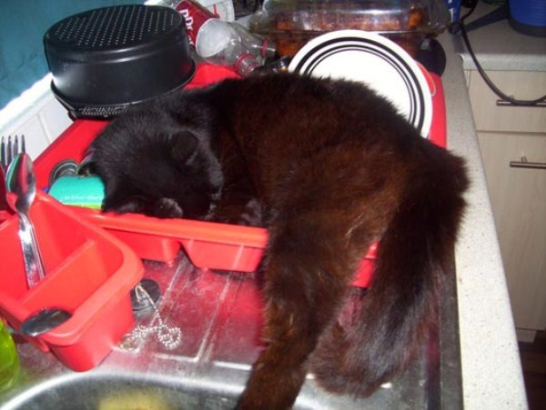 Crazy-Cat-Sleeping-Positions (4)