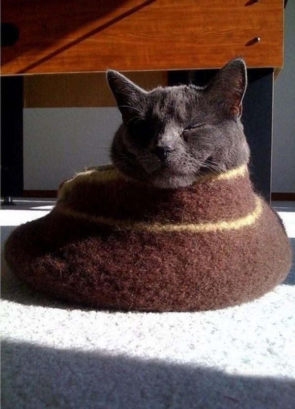 Crazy-Cat-Sleeping-Positions (40)