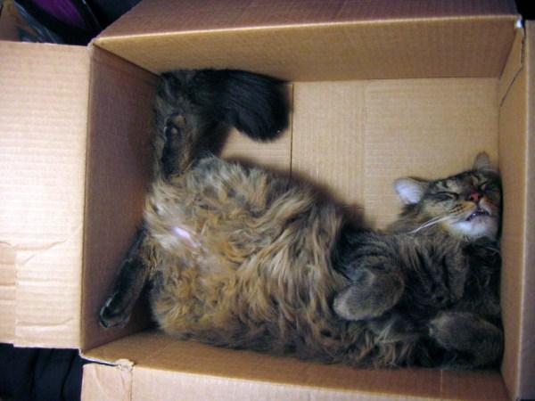 Crazy-Cat-Sleeping-Positions (51)