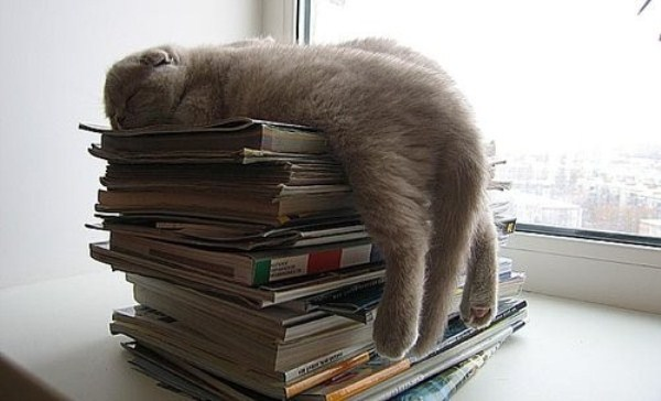 Crazy-Cat-Sleeping-Positions (54)
