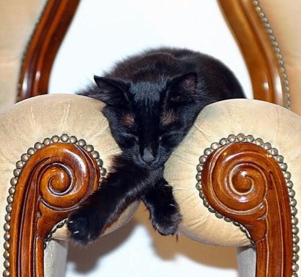 Crazy-Cat-Sleeping-Positions (55)