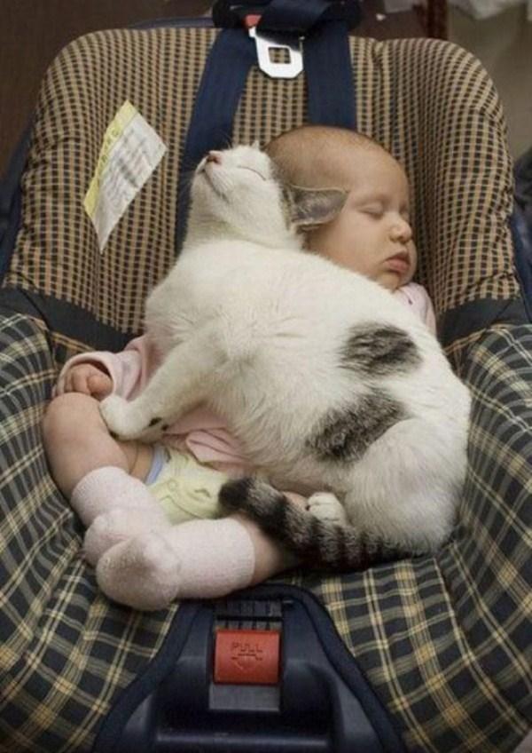 Crazy-Cat-Sleeping-Positions (57)