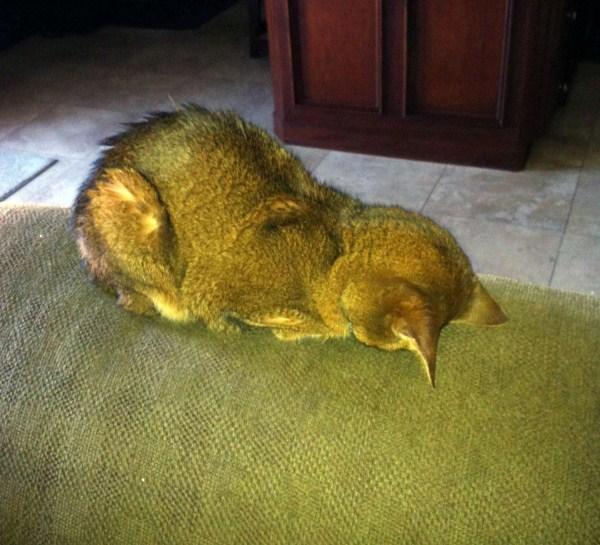 Crazy-Cat-Sleeping-Positions (58)