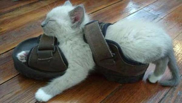 Crazy-Cat-Sleeping-Positions (6)