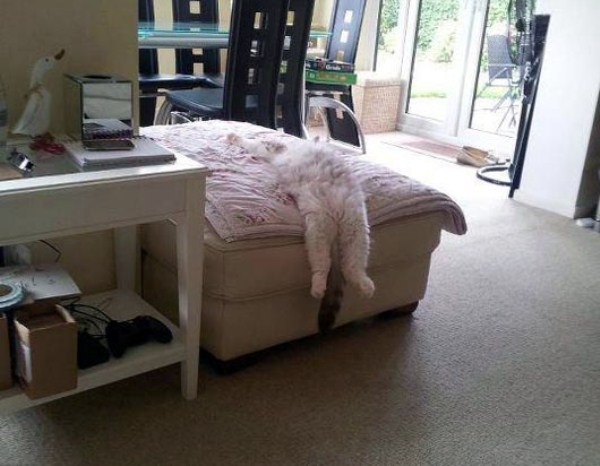 Crazy-Cat-Sleeping-Positions (7)