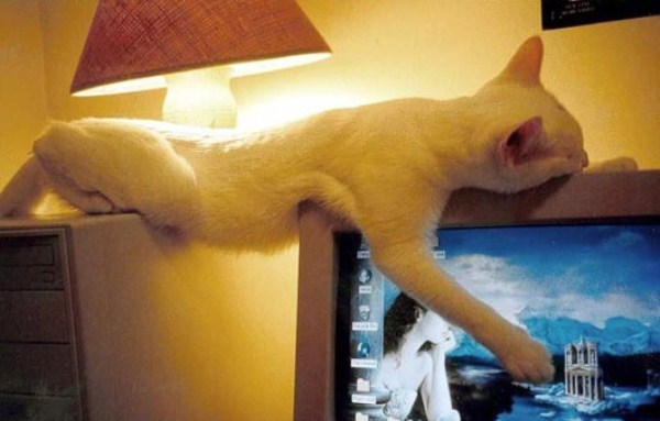 Crazy-Cat-Sleeping-Positions (9)
