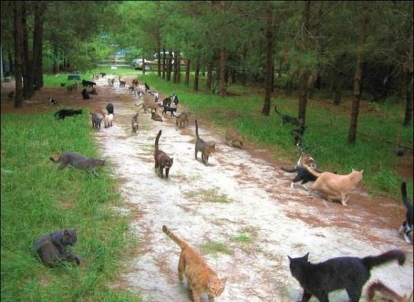 cats-in-heaven (1)