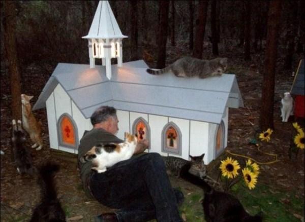 cats-in-heaven (12)