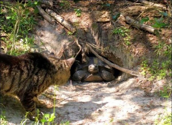 cats-in-heaven (15)
