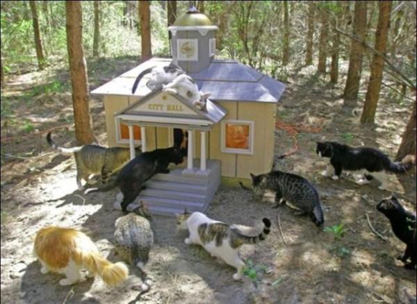 cats-in-heaven (18)