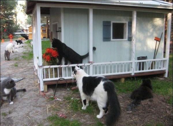 cats-in-heaven (19)