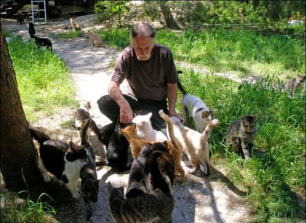 cats-in-heaven (20)