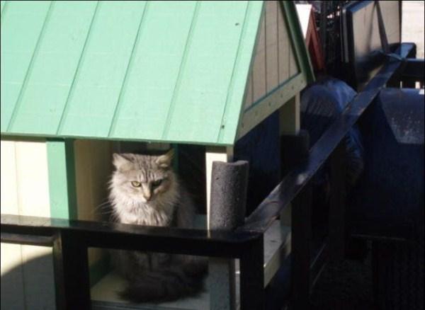 cats-in-heaven (26)