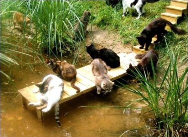 cats-in-heaven (28)