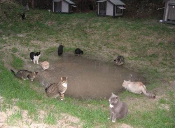 cats-in-heaven (3)