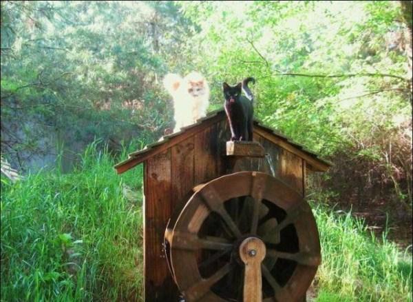 cats-in-heaven (30)