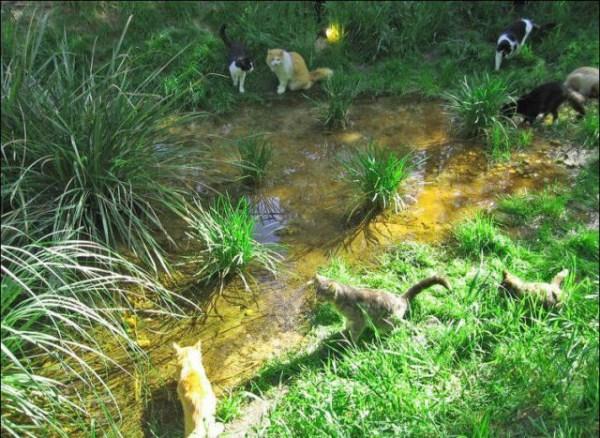 cats-in-heaven (34)