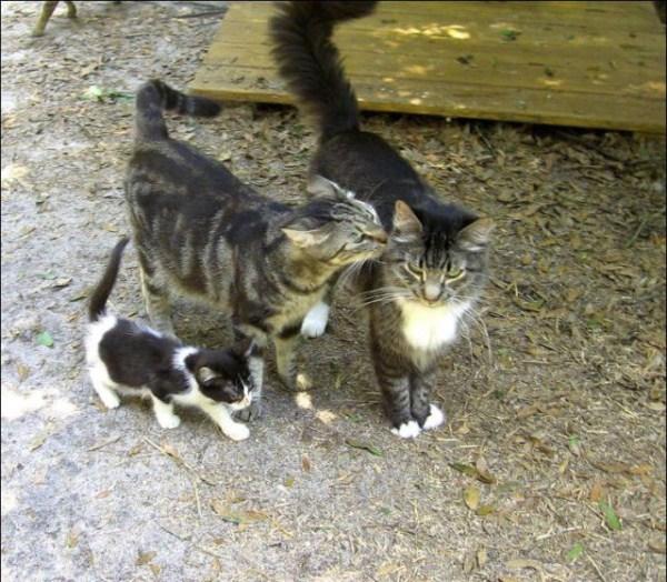 cats-in-heaven (35)