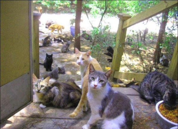 cats-in-heaven (36)