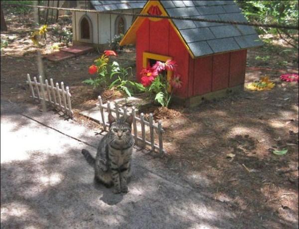 cats-in-heaven (37)