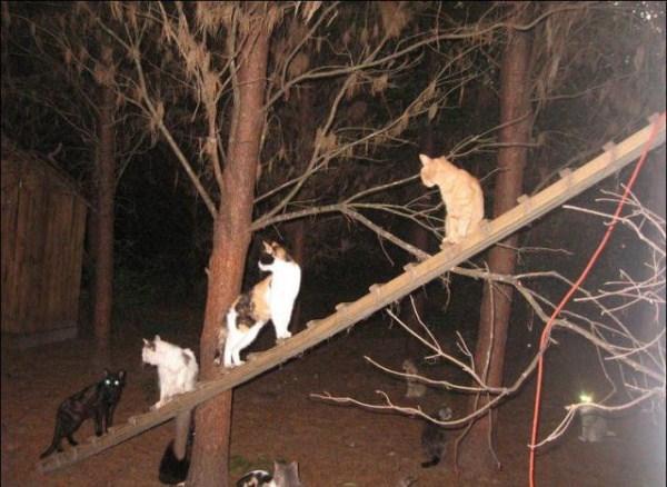 cats-in-heaven (39)