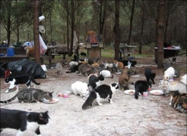 cats-in-heaven (4)