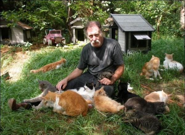 cats-in-heaven (41)