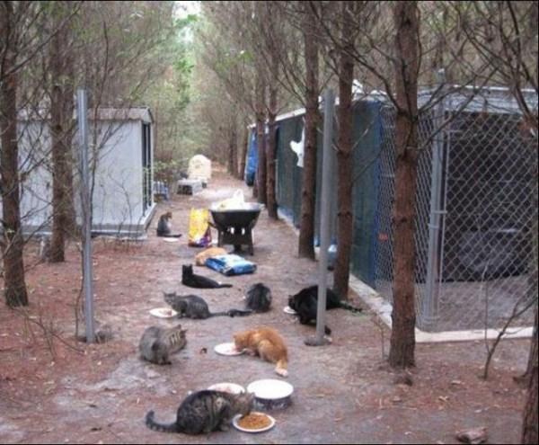 cats-in-heaven (6)