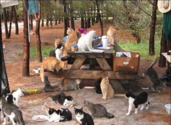 cats-in-heaven (7)