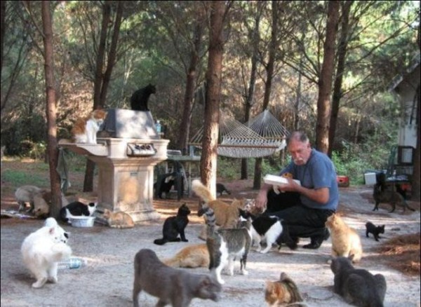 cats-in-heaven (8)