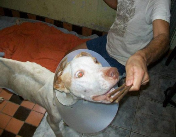 dog-rescue (10)