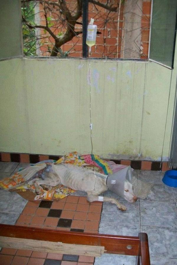 dog-rescue (14)