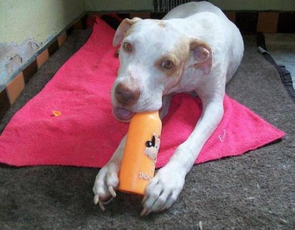dog-rescue (18)