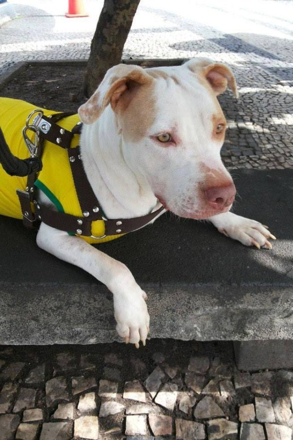 dog-rescue (21)