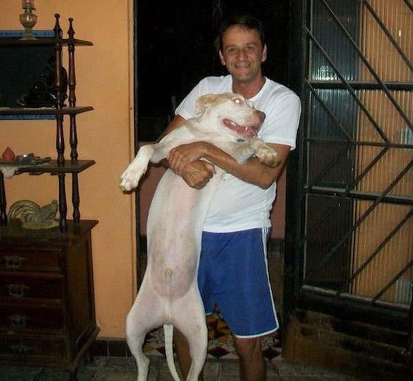 dog-rescue (23)
