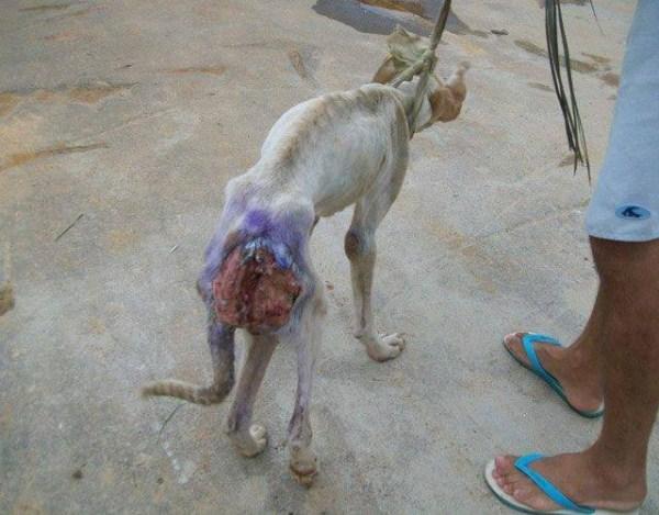 dog-rescue (3)