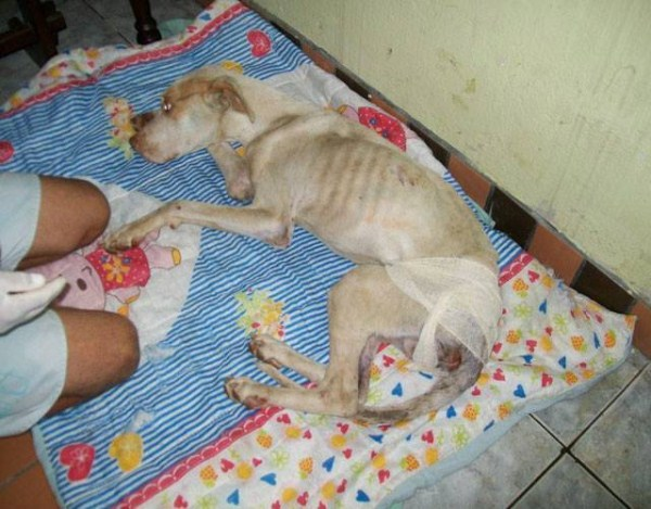 dog-rescue (8)
