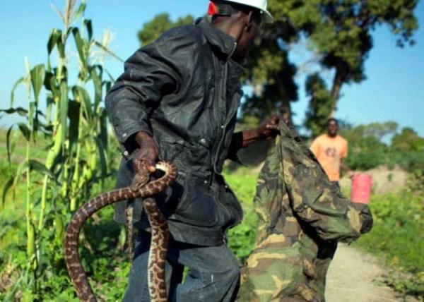 Snake-handler-Saintilus-Resilus-haiti (2)