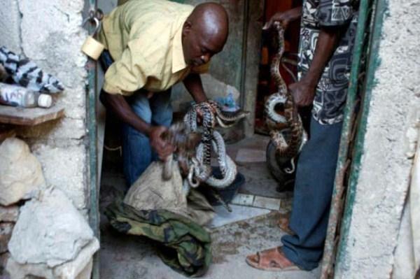 Snake-handler-Saintilus-Resilus-haiti (3)