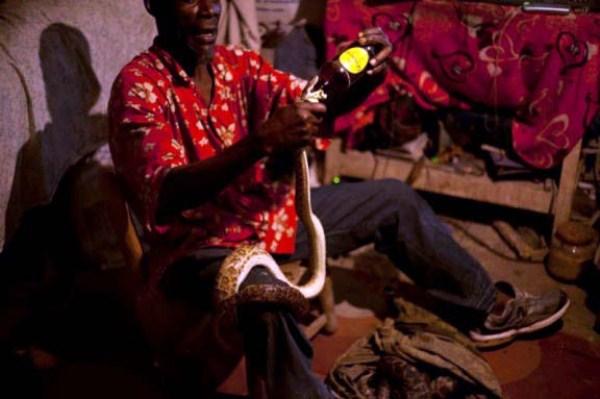 Snake-handler-Saintilus-Resilus-haiti (5)