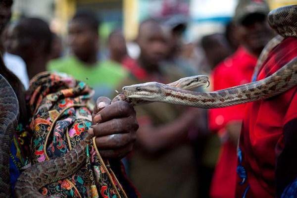 Snake-handler-Saintilus-Resilus-haiti (9)
