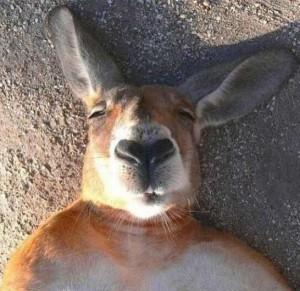 Animal Selfies (29 photos) 4