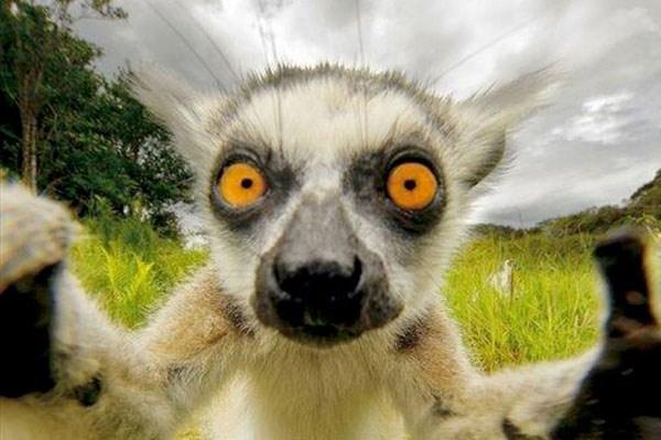 Animal-selfies-07
