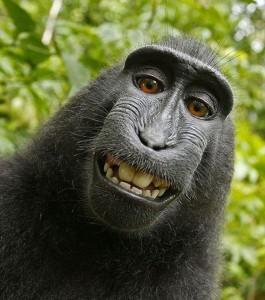 Animal Selfies (29 photos) 10
